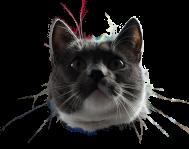 Emil the cat